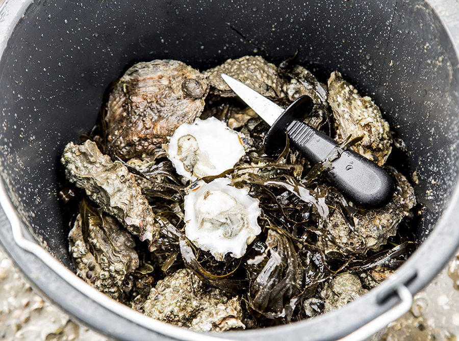 oesters-spand