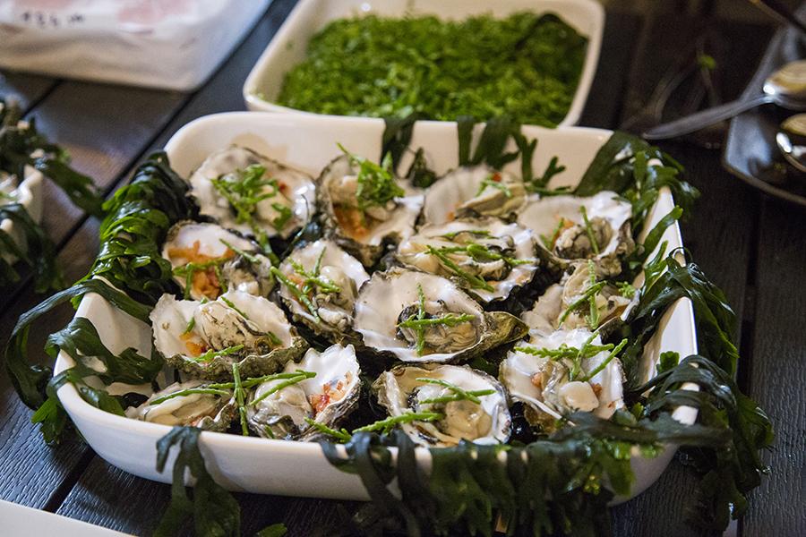 oesters-salturt